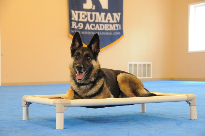 Jessaah (German Shepherd Dog) - Boot Camp Dog Training