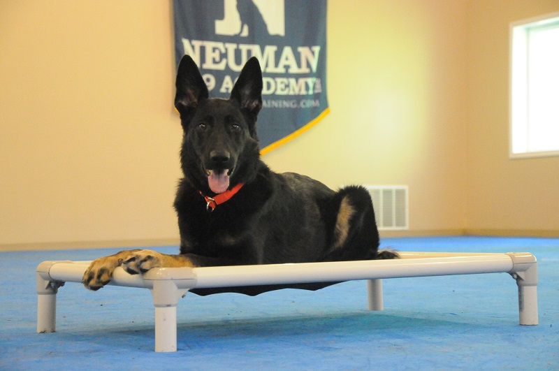 Keeva (German Shepherd) - Boot Camp Dog Training