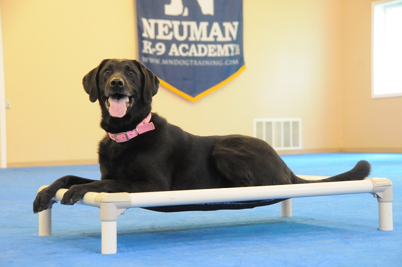 Kenzie (Labrador Retriever) - Boot Camp Dog Training