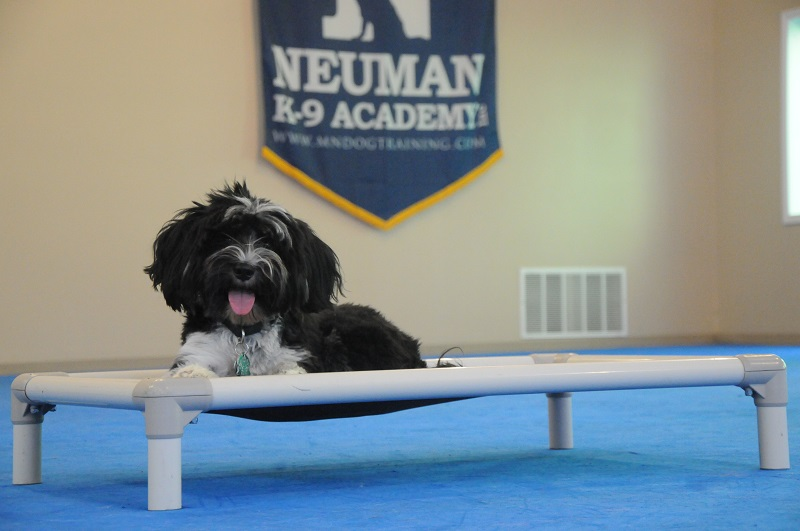Kiri (Tibetan Terrier) - Boot Camp Dog Training