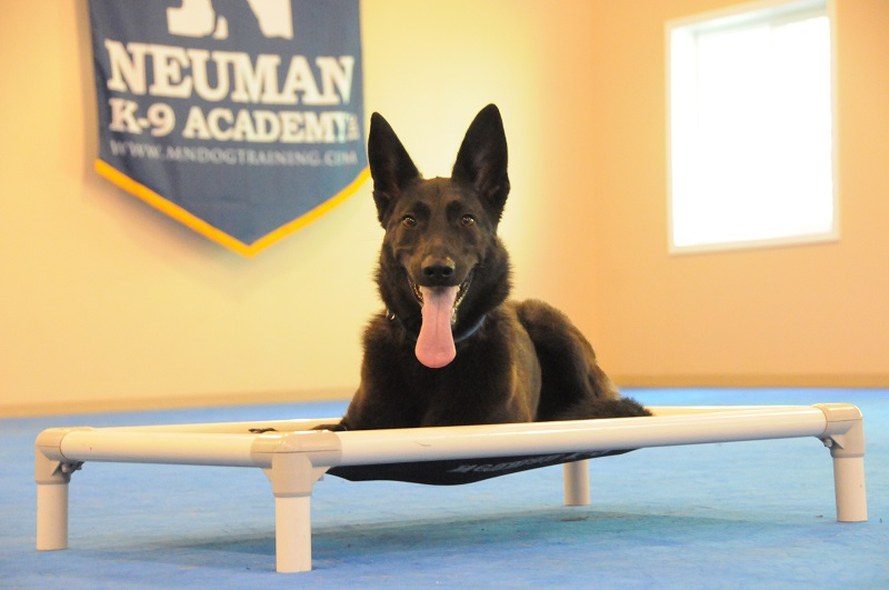 Kona (German Shepherd Dog) - Boot Camp Dog Training