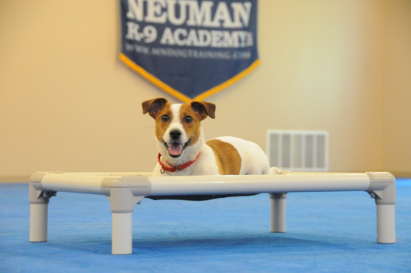 Lucky (Jack Russel Terrier) - Boot Camp Dog Training