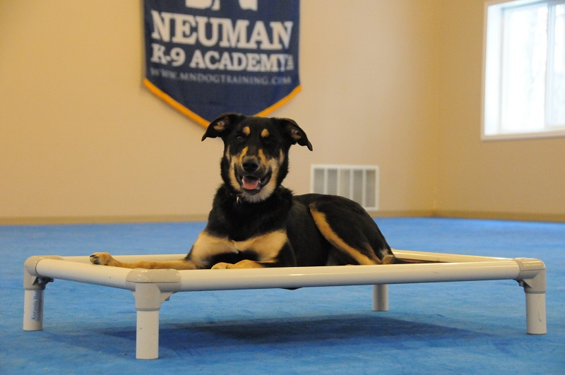 Lucy - Boot Camp Dog Training