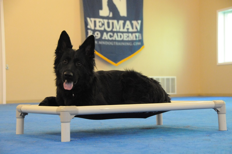 Lucy (German Shepherd Dog) - Boot Camp Dog Training