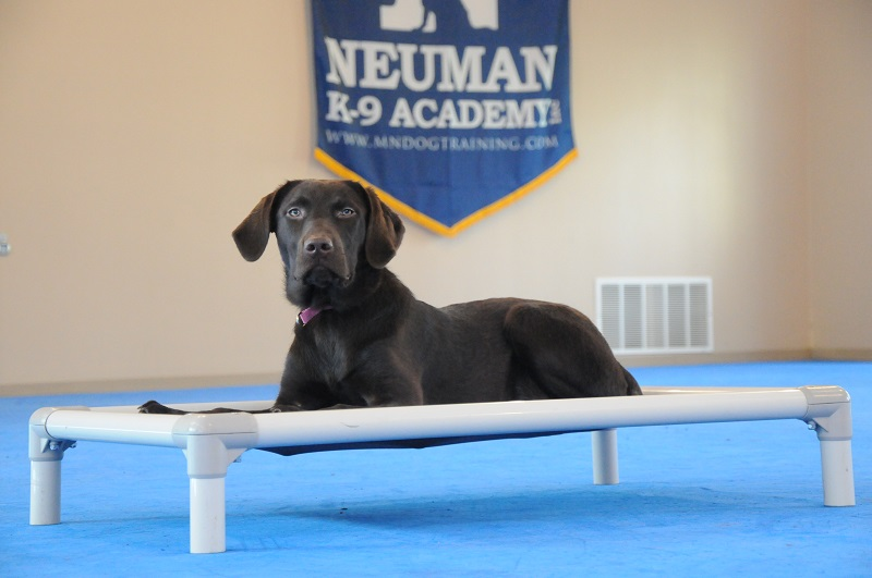 Lucy (Labrador Retriever) - Boot Camp Dog Training