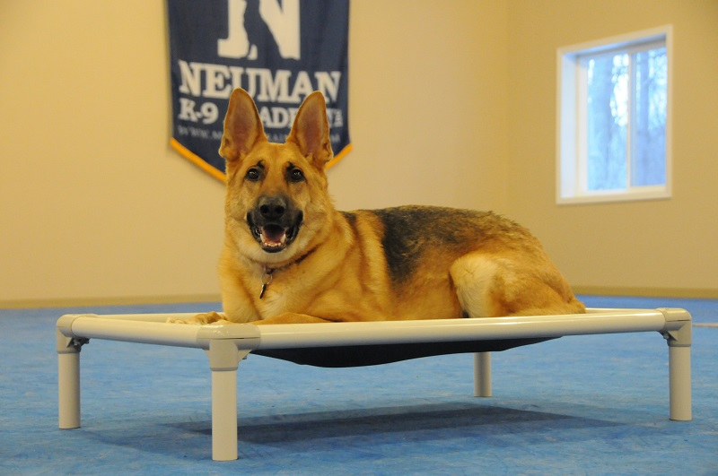 Major (German Shepherd) - Boot Camp Dog Training