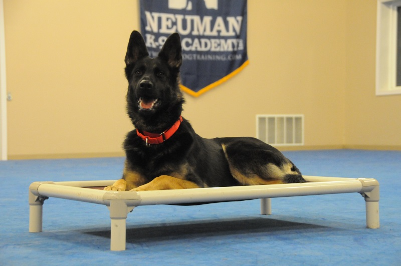 Mausi (German Shepherd) - Boot Camp Dog Training