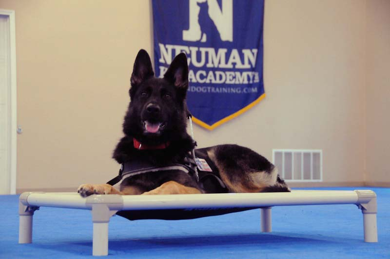 Mausi (Mobility Assistance Service Dog) - Boot Camp Dog Training
