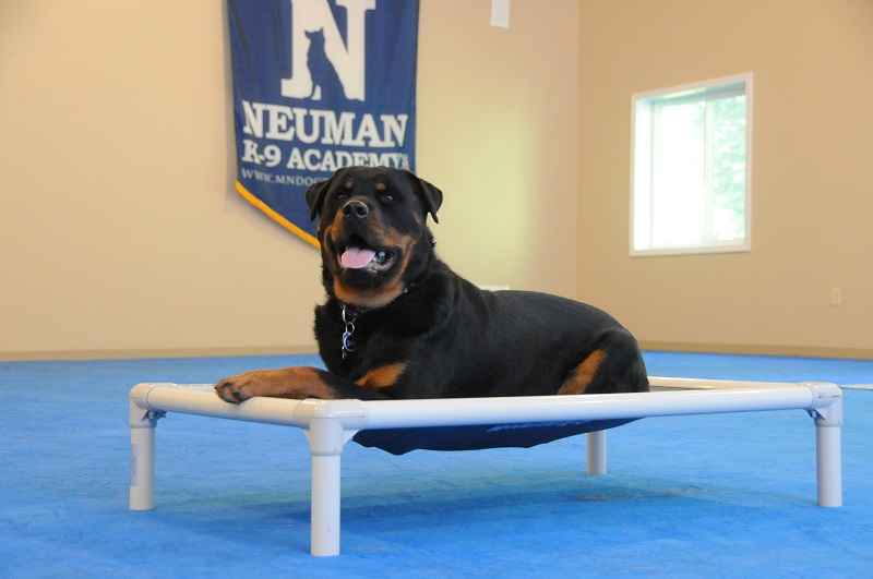 Maverick (Rottweiler) - Boot Camp Dog Training