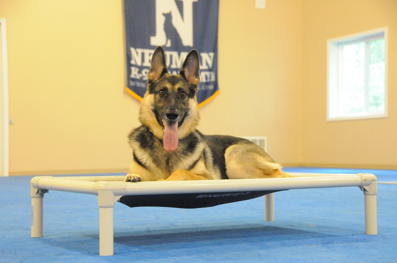 Molly (German Shepherd Dog) - Boot Camp Dog Training