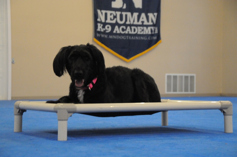 Nala - Boot Camp Dog Training