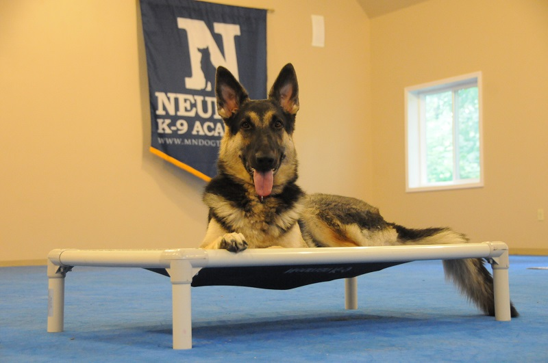 Nala (German Shepherd Dog) - Boot Camp Dog Training