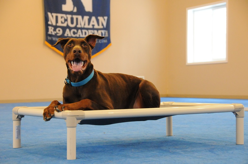 Nigel (Doberman Pinscher) - Boot Camp Dog Training