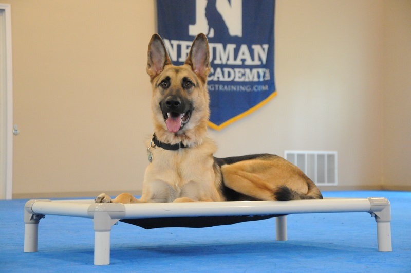 Odin (German Shepherd Dog) - Boot Camp Dog Training