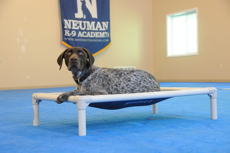Ole (German Shorthair Pointer) - Boot Camp Dog Training