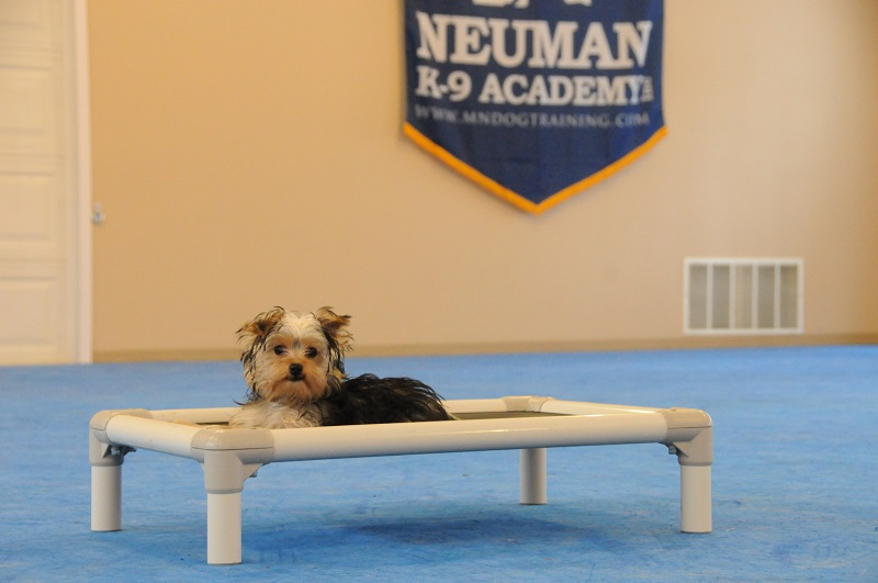 Piper (Yorkshire Terrier) - Puppy Camp Dog Training