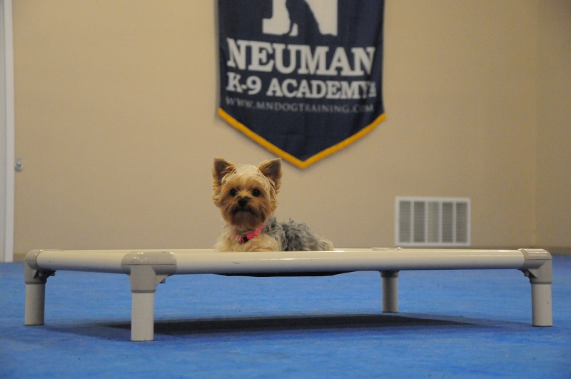 Piper (Yorkie) - Boot Camp Dog Training
