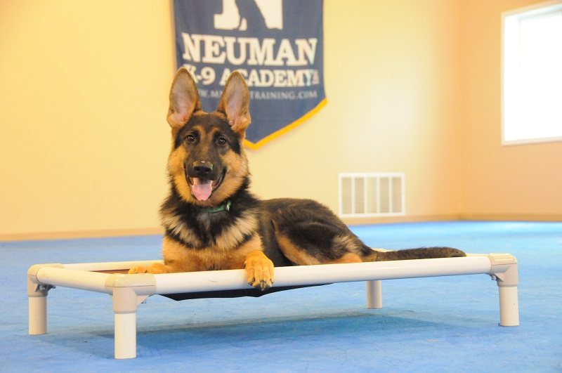 Reese (German Shepherd Dog) - Puppy Camp Dog Training