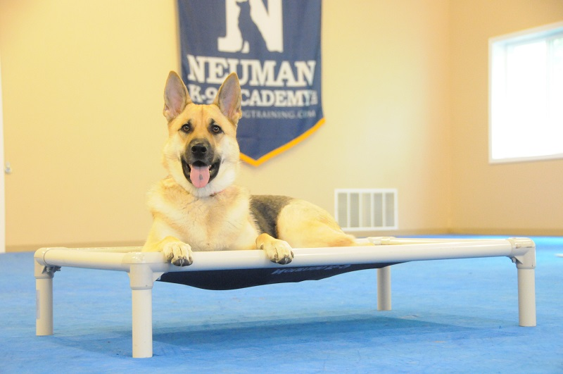 Skylar (German Shepherd Dog) - Boot Camp Dog Training