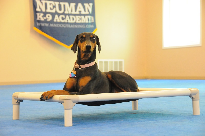 Sofie (Doberman Pinscher) - Boot Camp Dog Training