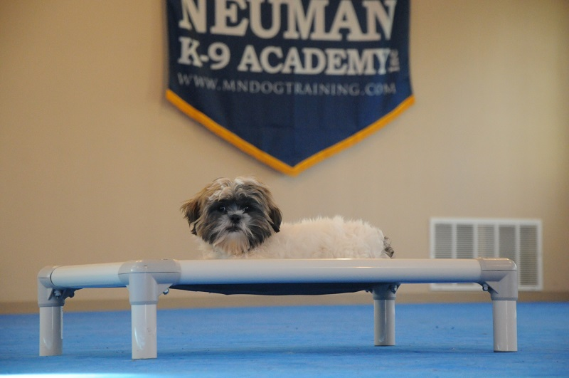 Winston (Shih Tzu) - Boot Camp Dog Training