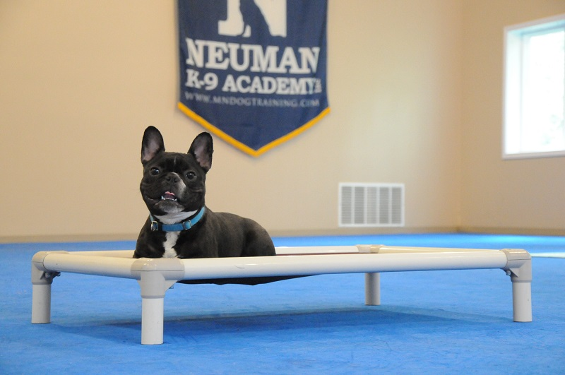 Zero (French Bulldog) - Boot Camp Dog Training