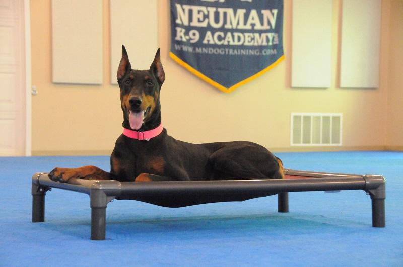 Akira (Doberman Pinscher) - Boot Camp Dog Training