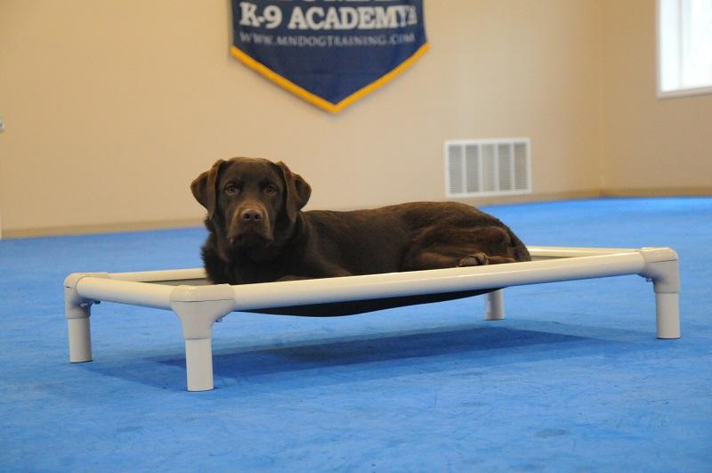 Bella (Labrador Retriever) - Boot Camp Dog Training