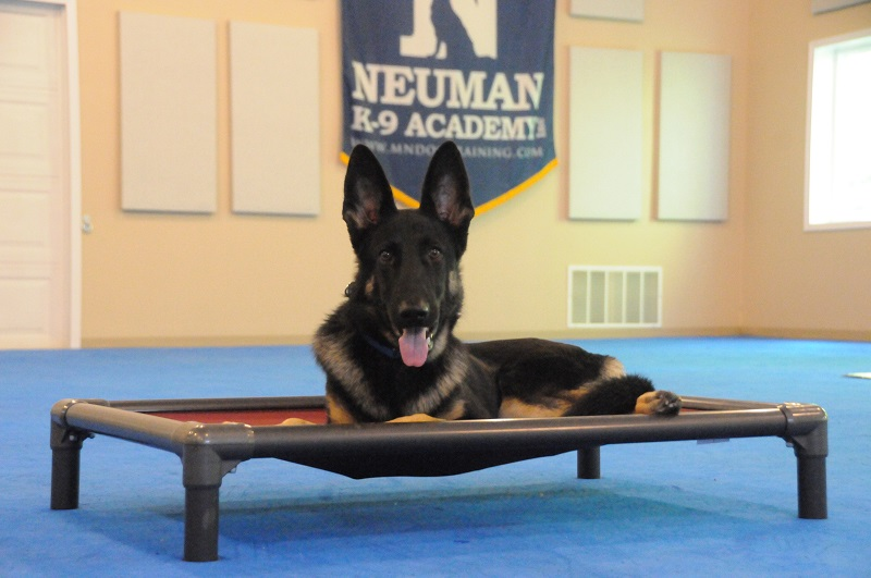 Billy (German Shepherd Dog) - Boot Camp Dog Training