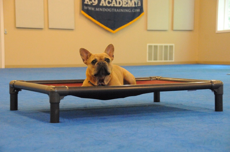 Blu (French Bulldog) - Boot Camp Dog Training