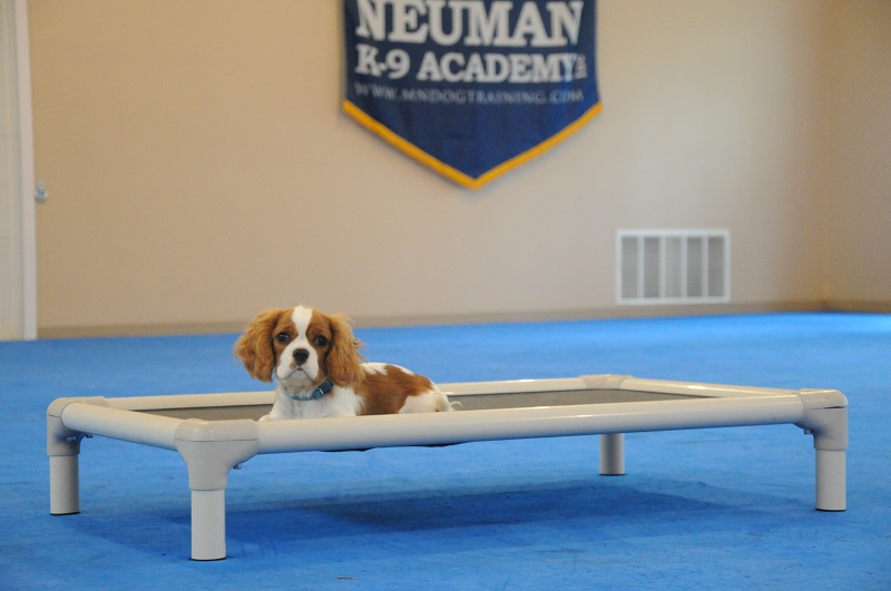 Gizmo - Puppy Camp Dog Training
