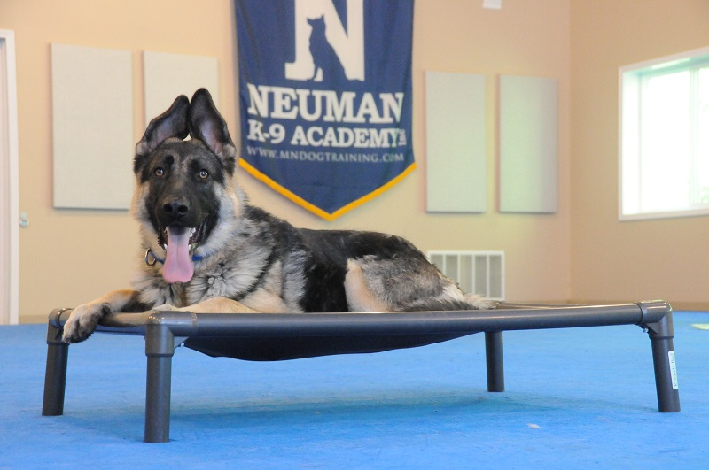 Grizzly (German Shepherd Dog) - Boot Camp Dog Training