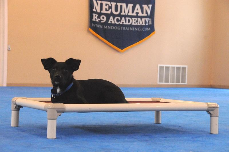 Gus - Puppy Camp Dog Training