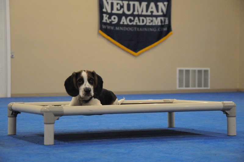 Henry - Puppy Camp Dog Training