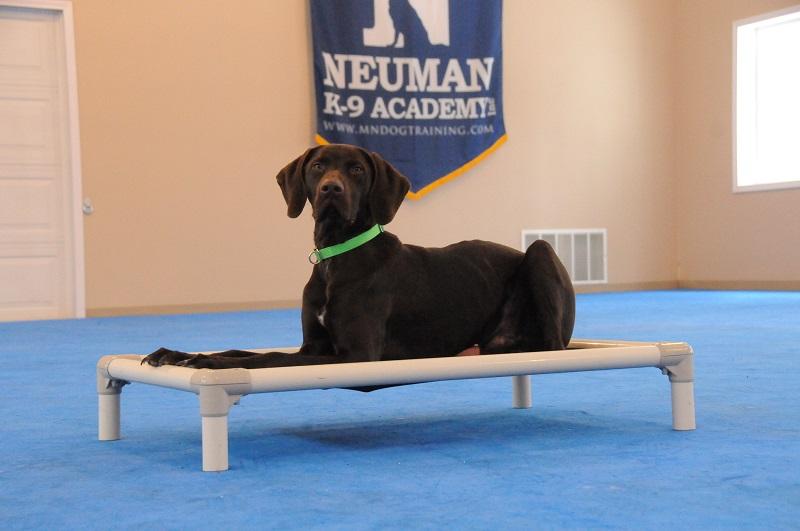 Hudson (German Shorthair Pointer) - Boot Camp Dog Training