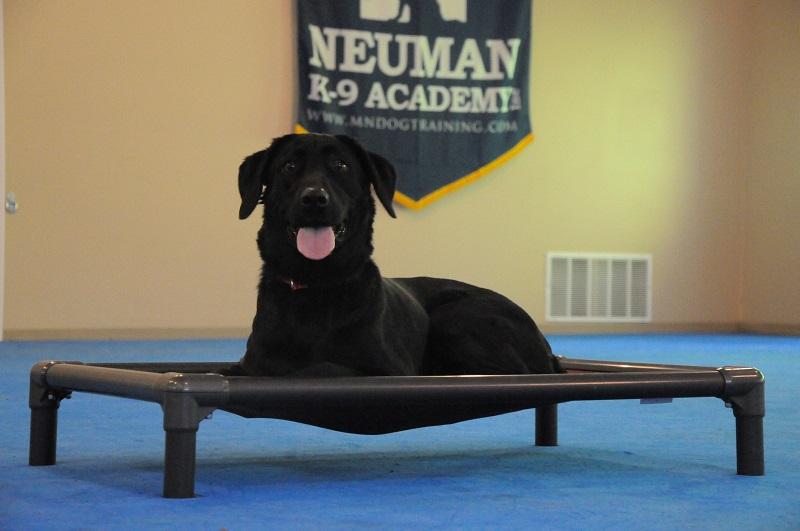 Jaci (Labrador Retriever) - Boot Camp Dog Training
