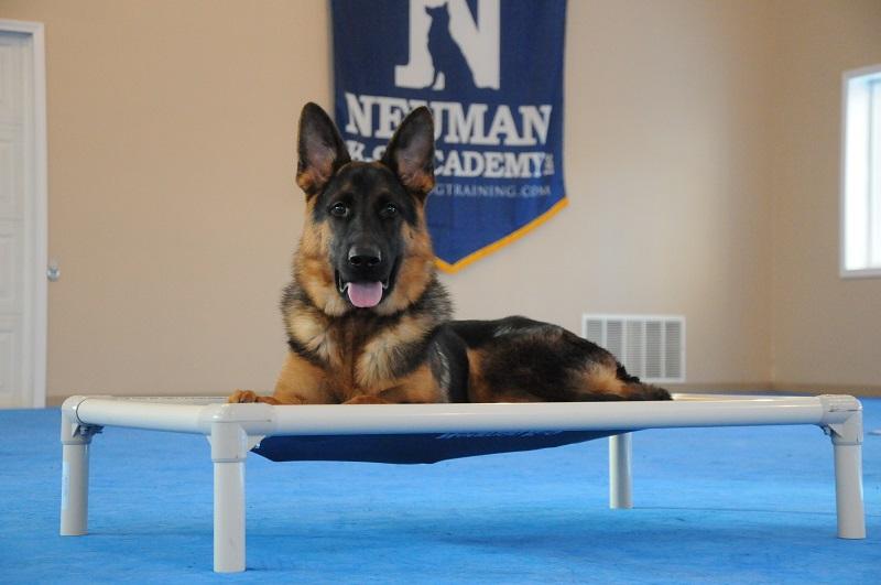 Jax (German Shepherd) - Boot Camp Dog Training