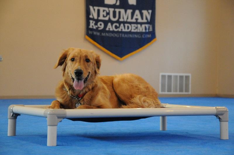 KC (Golden Retriever) - Boot Camp Dog Training