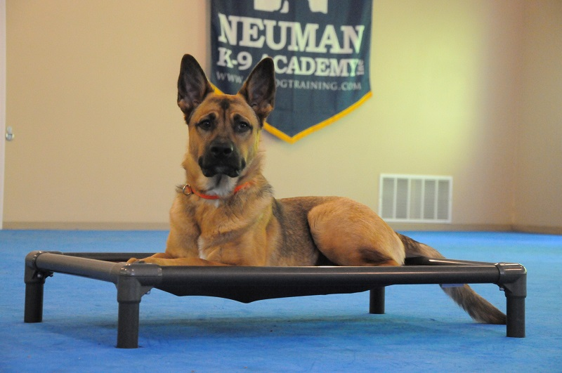 Kabu - Boot Camp Dog Training