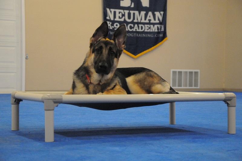 Karma (German Shepherd Dog) - Boot Camp Dog Training