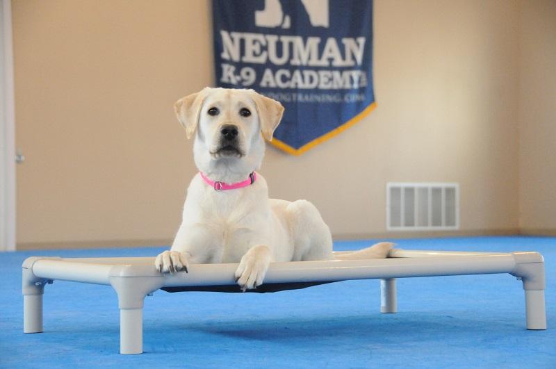Kenna (Labrador Retriever) - Puppy Camp Dog Training