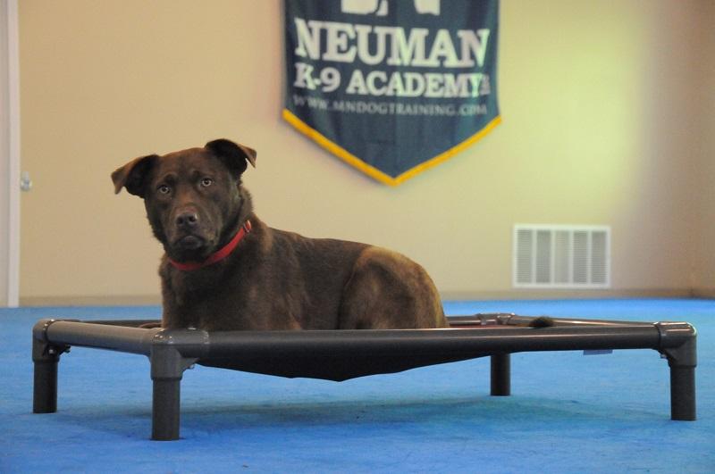 Kibo - Boot Camp Dog Training