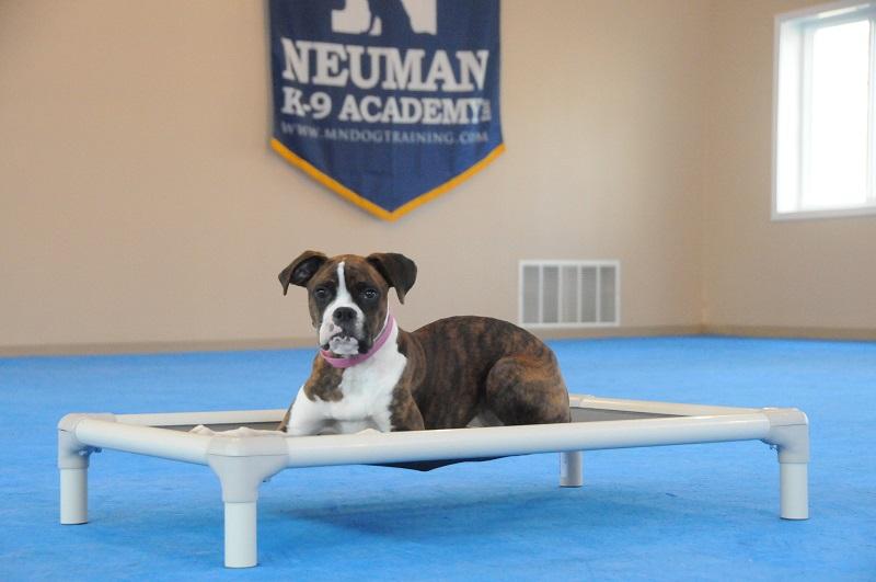 Kita (Boxer) - Puppy Camp Dog Training