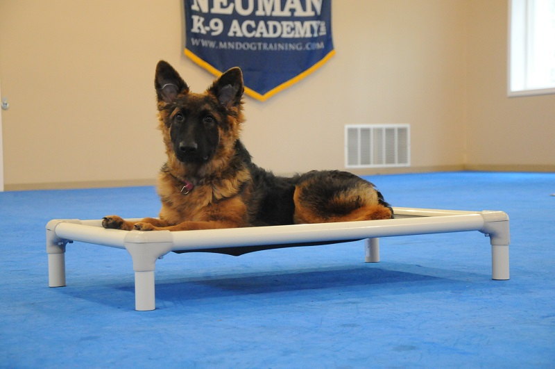 Koda (German Shepherd Dog) - Puppy Camp Dog Training
