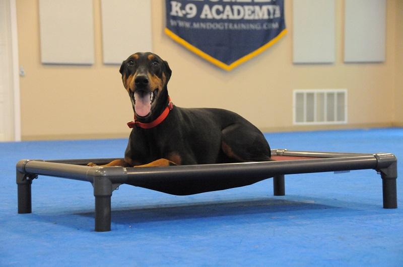 Lexi (Doberman Pinscher) - Boot Camp Dog Training