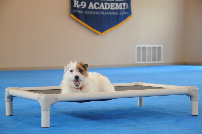 Lizzie (Jack Russell Terrier) - Boot Camp Dog Training