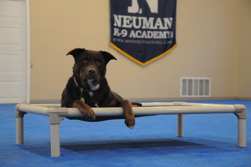 Lola - Boot Camp Dog Training