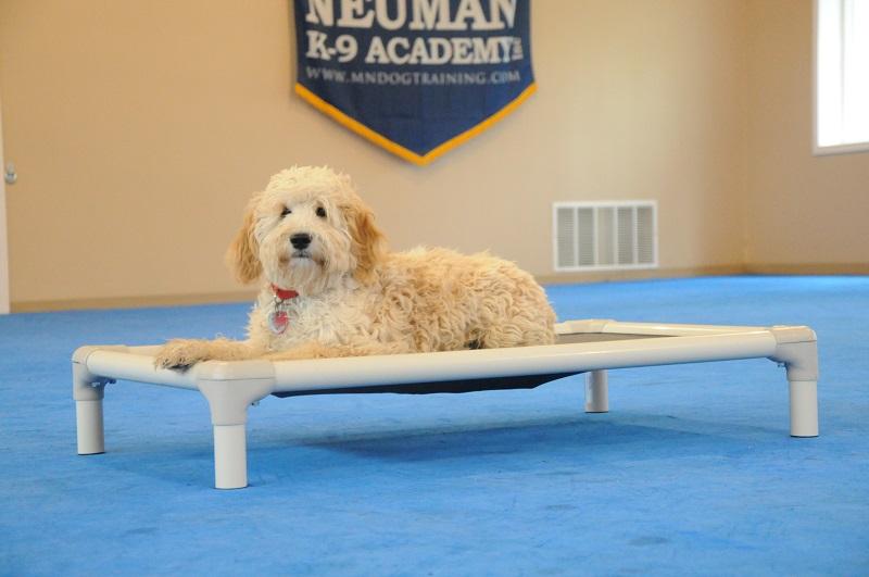Lulu (Goldendoodle) - Puppy Camp Dog Training