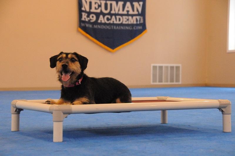 Macie - Boot Camp Dog Training