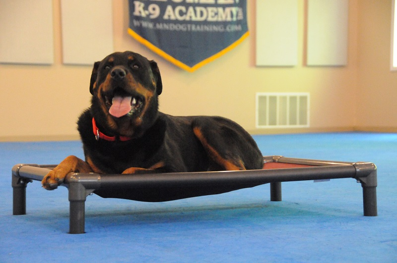 Maverick (Rottweiler) - Boot Camp Dog Training